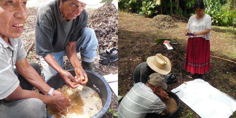 Manuel y Jose María preparan un caldo de levadura y de panela para elaborar bocashi, un tipo de abono orgánico, mientras que doña Sofía, líder comunitaria Q'eqchi documenta el proceso.